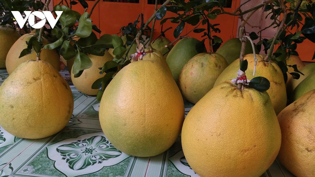 Tiền Giang: Nông dân trồng giống bưởi gì lạ quá, doanh nghiệp ở Sài Gòn xuống đặt mua tới tấp - Ảnh 3.