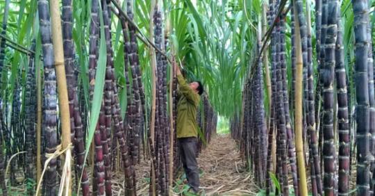 Thái Lan phản ứng Việt Nam áp thuế chống bán phá giá đường