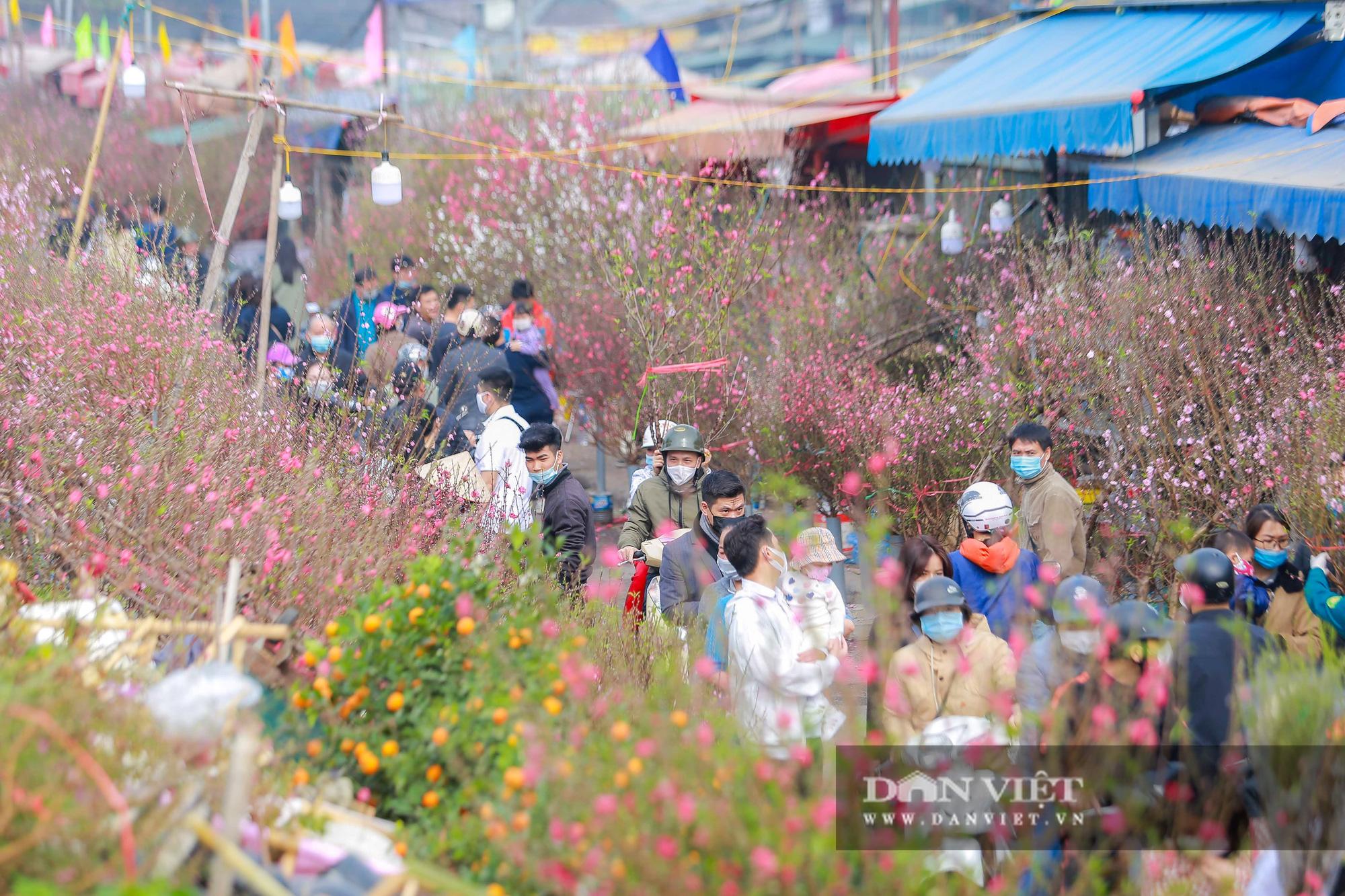 Chợ hoa Quảng Bá tấp nập những ngày cuối năm - Ảnh 1.