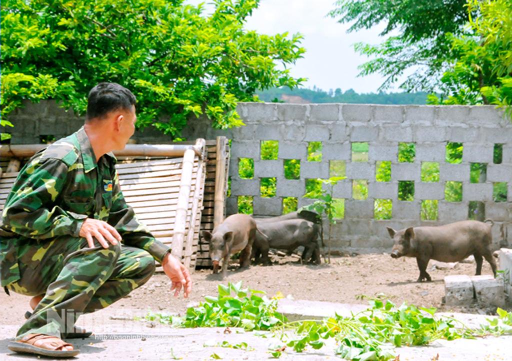 """Ninh Bình: Lợn Táp Ná là thứ lợn gì mà nuôi chưa kịp lớn đã có người """"đặt gạch"""" đòi mua? - Ảnh 1."""