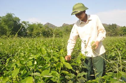 Ninh Bình: Đem thứ rau rừng đặc sản về trồng, ăn ngọt như mì chính, bán rõ đắt mà thương lái tranh nhau mua - Ảnh 1.