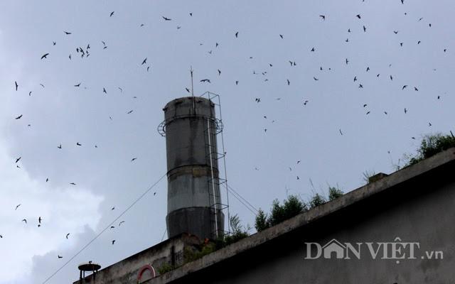 """Tỉnh nào nuôi nhiều """"chim tiền tỷ"""" nhất Việt Nam, thật bất ngờ không phải ở Khánh Hoà - Ảnh 1."""