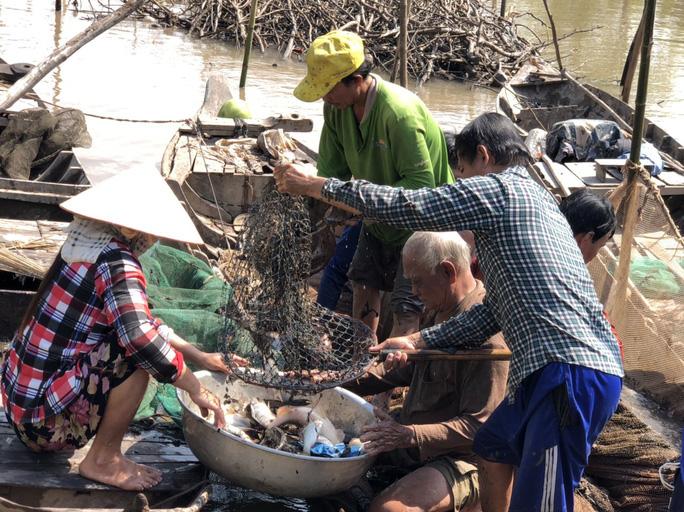 Đồng Tháp: Đi thuyền ra nhánh sông Hậu xem nông dân dỡ chà bắt cá, cá đồng, tôm sông búng nhảy tanh tách - Ảnh 8.