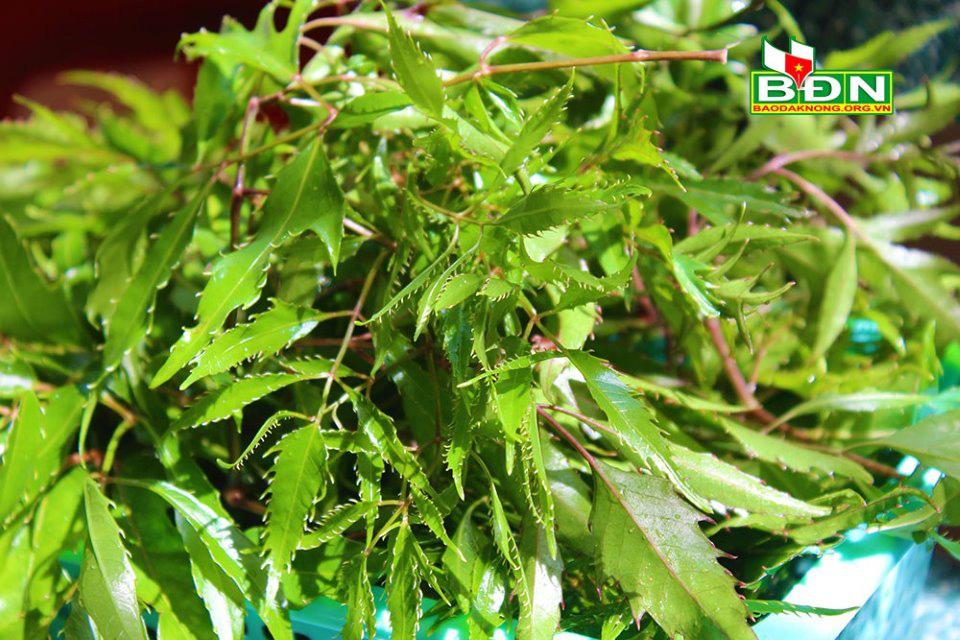 Đắk Nông: Bắt cá suối đem chiên vàng lên giã với lá cây thuốc quý này, thơm ngon đến miếng cuối cùng - Ảnh 3.