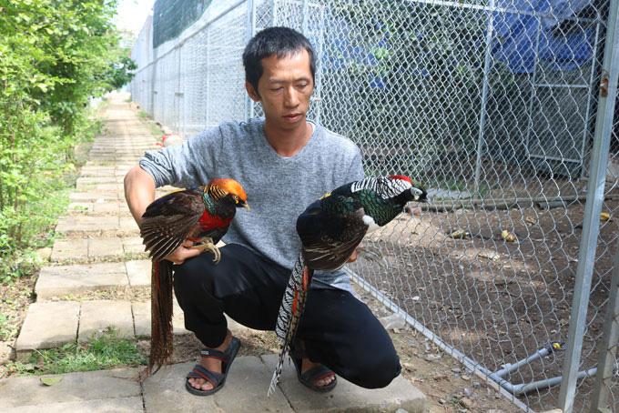 Khánh Hòa: Lạ, ông nông dân cầm10 tỷ và bằng Đại học thủy sản lên núi nuôi la liệt những loài gà lạ hoắc - Ảnh 1.