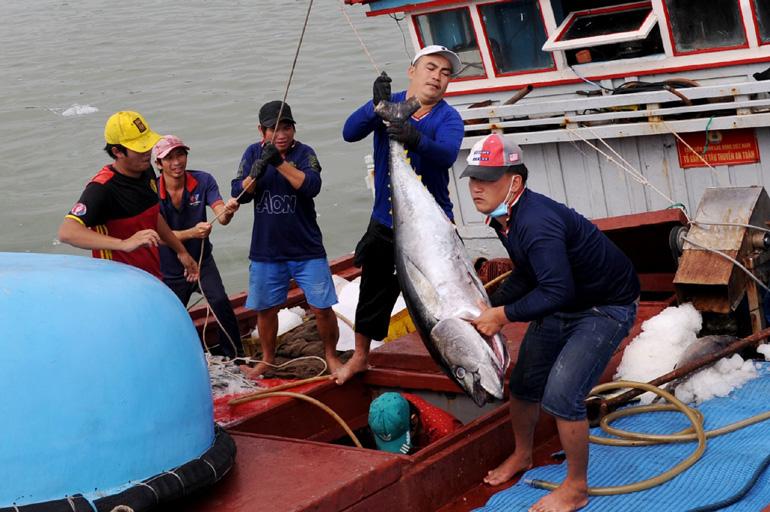 Phú Yên: Ngư dân bắt được toàn cá khủng, loài cá gì mà  có có con nặng gần 1 tạ? - Ảnh 1.