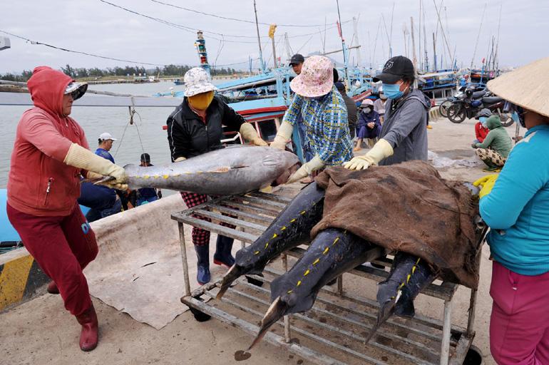 Phú Yên: Ngư dân bắt được toàn cá khủng, loài cá gì mà  có có con nặng gần 1 tạ? - Ảnh 3.