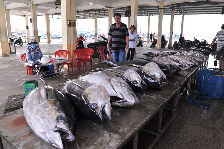 Phú Yên: Ngư dân bắt được toàn cá khủng, loài cá gì mà  có có con nặng gần 1 tạ? - Ảnh 5.