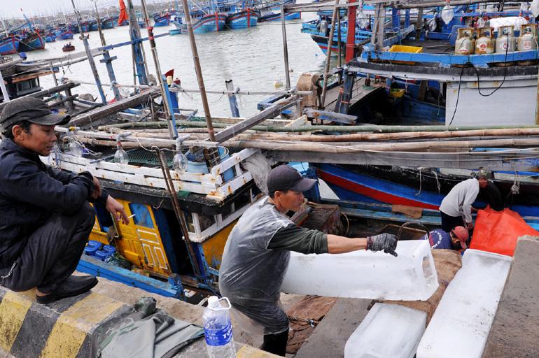 Phú Yên: Ngư dân bắt được toàn cá khủng, loài cá gì mà  có có con nặng gần 1 tạ? - Ảnh 6.