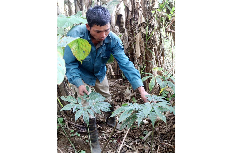 """Lào Cai: Chàng trai người Hà Nhì và khu vườn """"bí ẩn"""" trồng cây thuốc quý mà thương lái Trung Quốc đang săn lùng - Ảnh 5."""