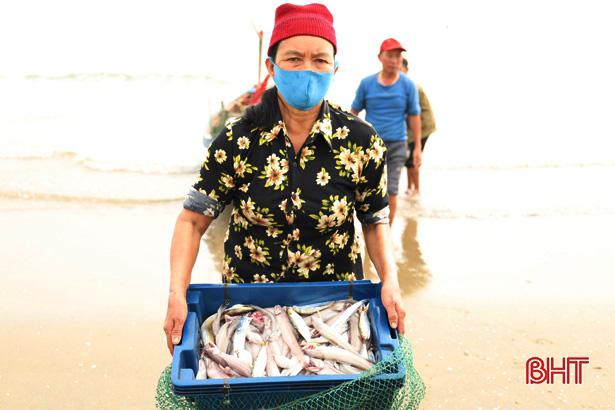 Hà Tĩnh: Ngư dân trúng đậm loại cá nhão như cháo, được dân nhậu lùng mua, mỗi tàu lãi 5-7 triệu - Ảnh 2.