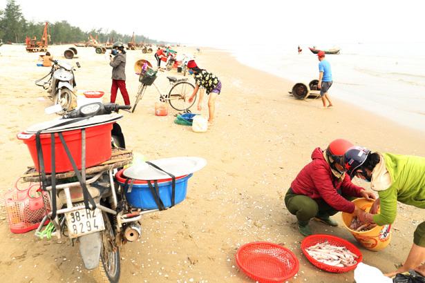 Hà Tĩnh: Ngư dân trúng đậm loại cá nhão như cháo, được dân nhậu lùng mua, mỗi tàu lãi 5-7 triệu - Ảnh 4.