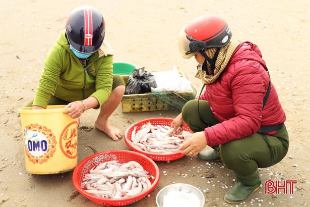 Hà Tĩnh: Ngư dân trúng đậm loại cá nhão như cháo, được dân nhậu lùng mua, mỗi tàu lãi 5-7 triệu - Ảnh 5.