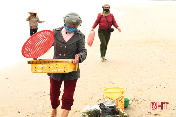 Hà Tĩnh: Ngư dân trúng đậm loại cá nhão như cháo, được dân nhậu lùng mua, mỗi tàu lãi 5-7 triệu - Ảnh 6.