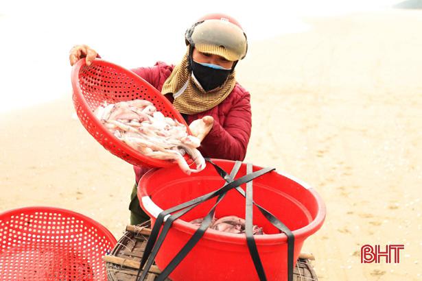 Hà Tĩnh: Ngư dân trúng đậm loại cá nhão như cháo, được dân nhậu lùng mua, mỗi tàu lãi 5-7 triệu - Ảnh 7.