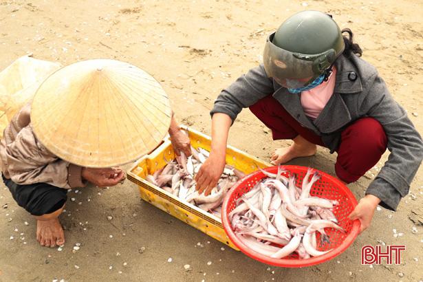 Hà Tĩnh: Ngư dân trúng đậm loại cá nhão như cháo, được dân nhậu lùng mua, mỗi tàu lãi 5-7 triệu - Ảnh 8.