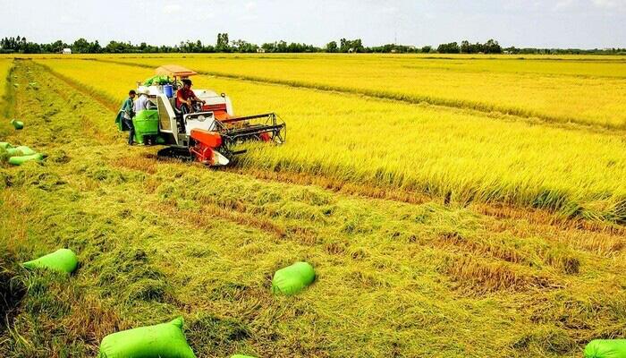 Đất nông nghiệp, đất trồng cây lâu năm có được thế chấp ngân hàng không? - Ảnh 1.
