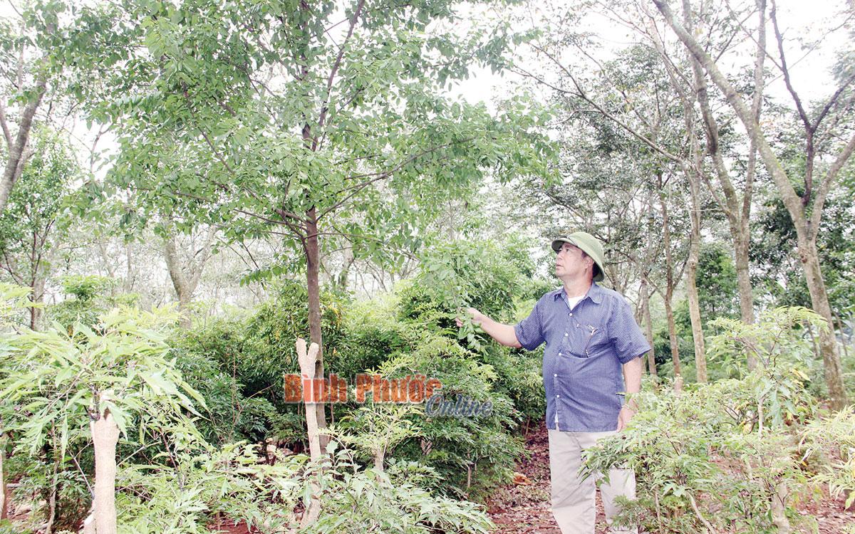 """Một ông nông dân tỉnh Bình Phước có """"kho báu"""" cả trăm tỷ nhờ đào hố chôn thứ này xuống đất cách đây 15 năm - Ảnh 1."""