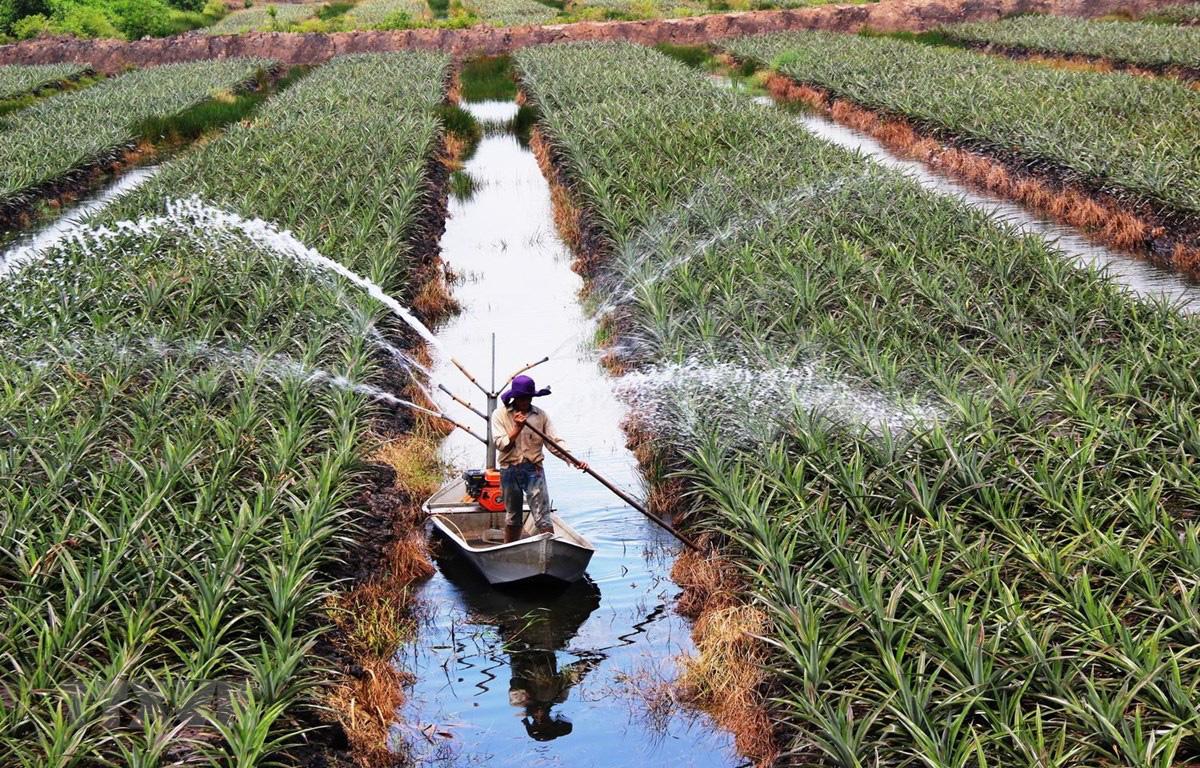 Phân loại đất nông nghiệp theo Luật mới - Ảnh 1.