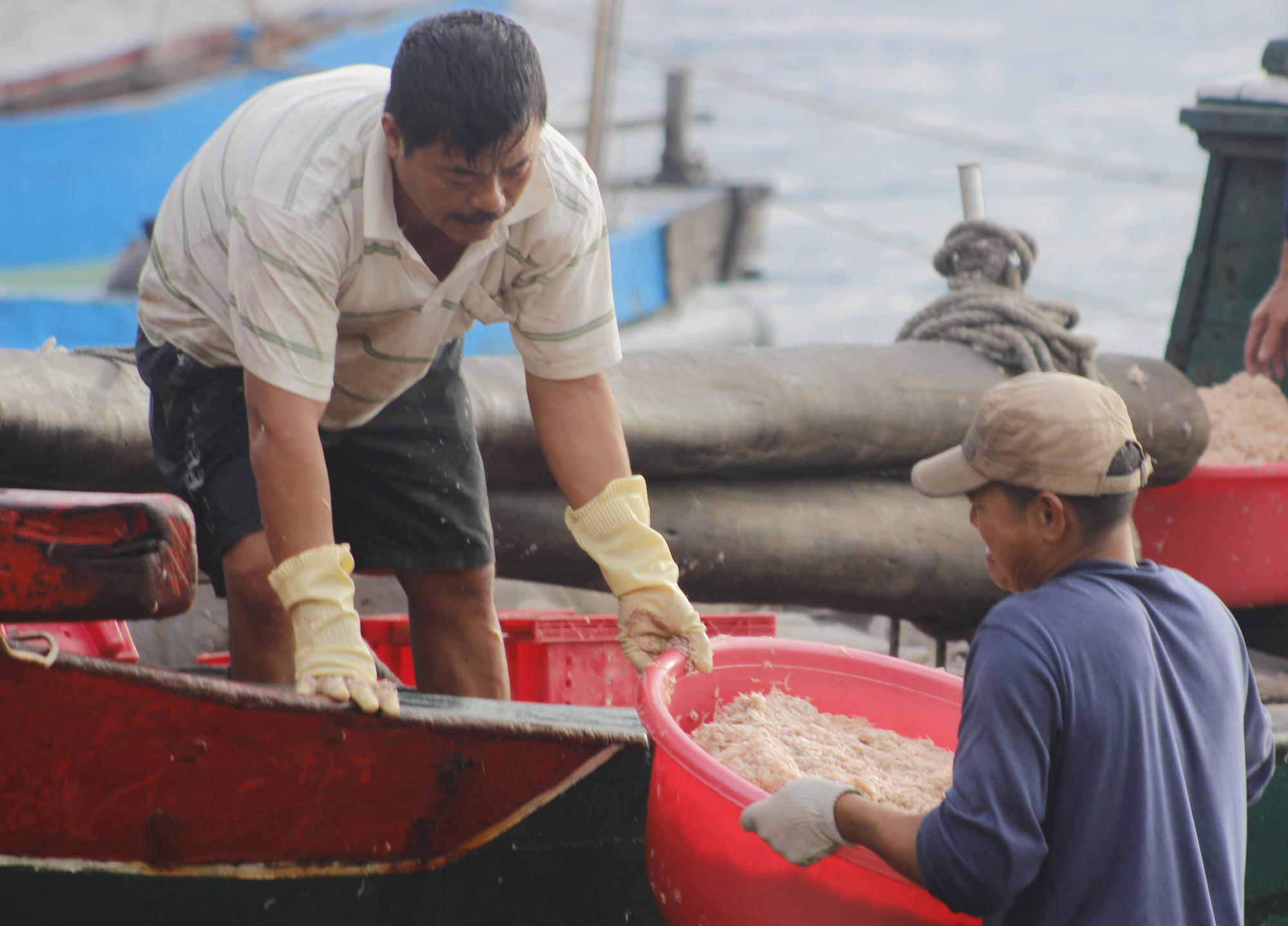 """Ngư dân Quảng Bình săn """"lộc biển"""" đầu năm cập bến đầy khoang cá, ruốc biển - Ảnh 2."""