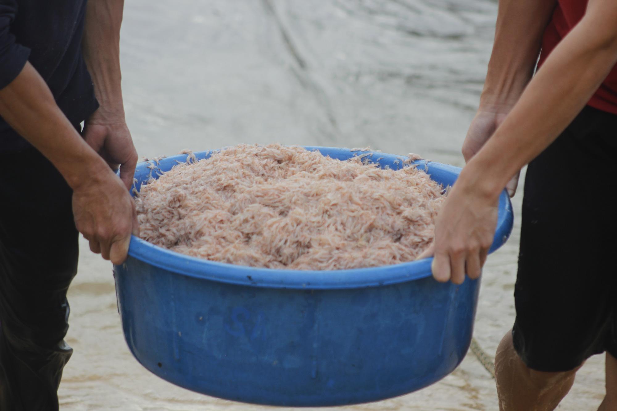 """Ngư dân Quảng Bình săn """"lộc biển"""" đầu năm cập bến đầy khoang cá, ruốc biển - Ảnh 3."""