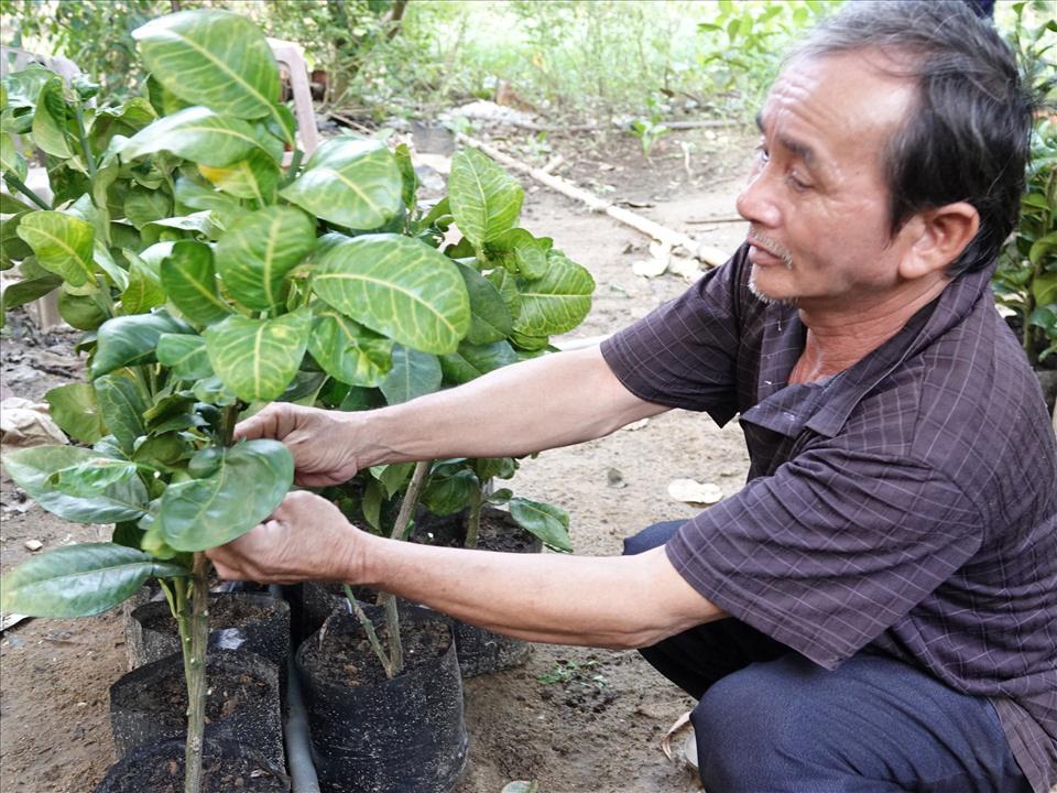 Bình Định: Một ông nông dân bán vé số bất ngờ giàu lên nhờ trồng bưởi da xanh của tỉnh Bến Tre - Ảnh 3.
