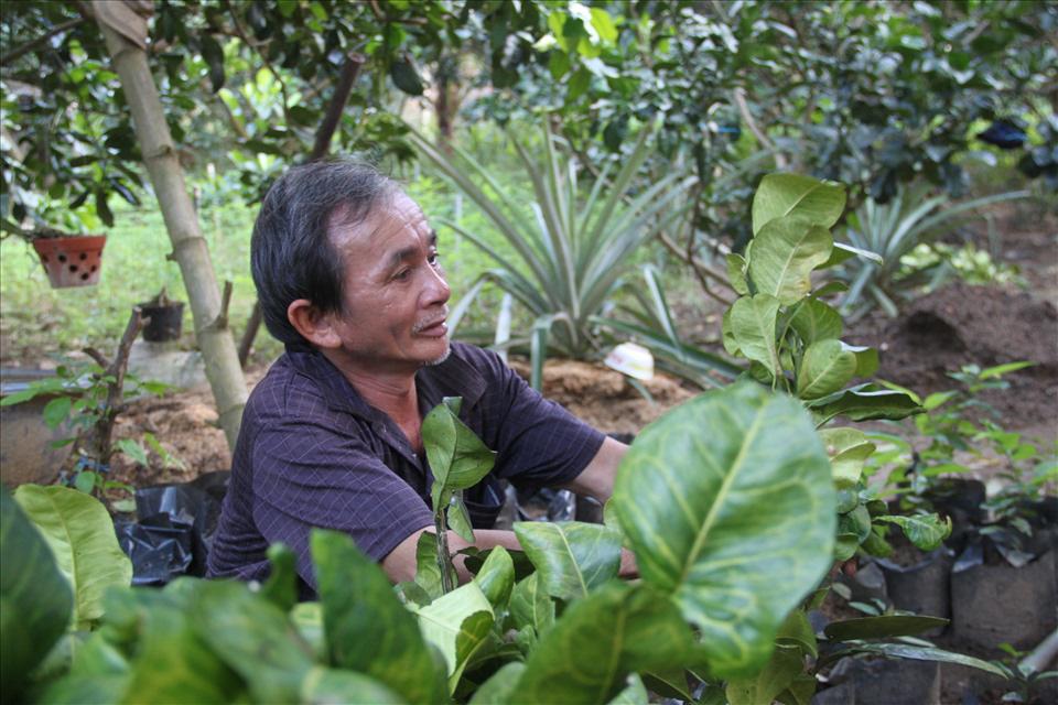 Bình Định: Một ông nông dân bán vé số bất ngờ giàu lên nhờ trồng bưởi da xanh của tỉnh Bến Tre - Ảnh 1.