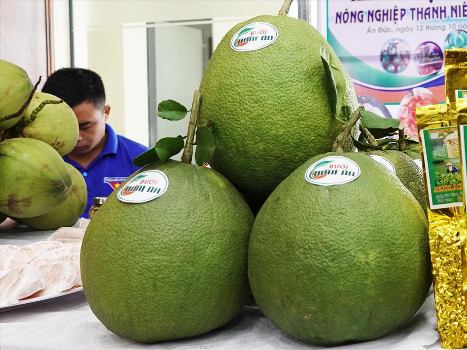Bình Định: Một ông nông dân bán vé số bất ngờ giàu lên nhờ trồng bưởi da xanh của tỉnh Bến Tre - Ảnh 5.