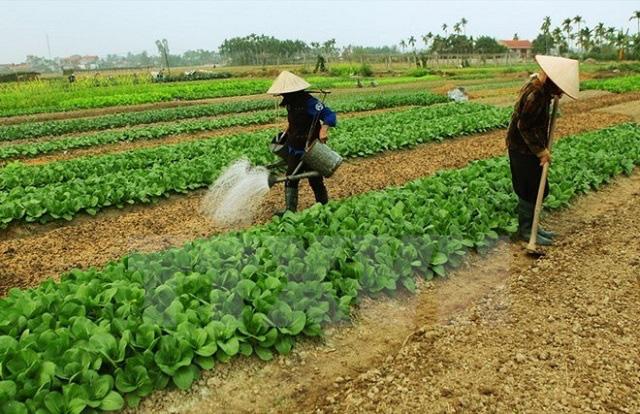 Chính sách đền bù đất nông nghiệp mới nhất - Ảnh 1.