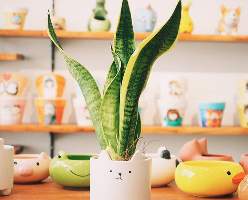 7 loại cây phong thủy Thần Tài ưa thích, đầu năm rước lộc vào nhà - Ảnh 1.