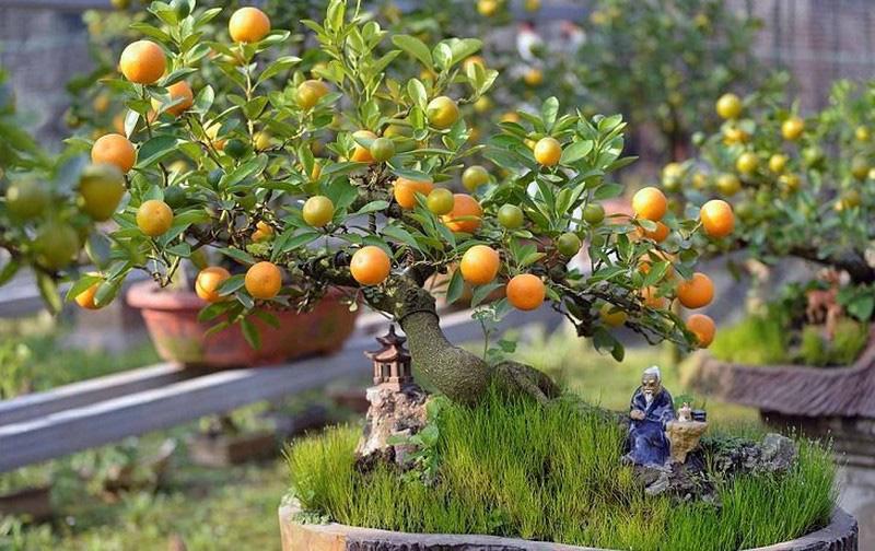 7 loại cây phong thủy Thần Tài ưa thích, đầu năm rước lộc vào nhà - Ảnh 2.