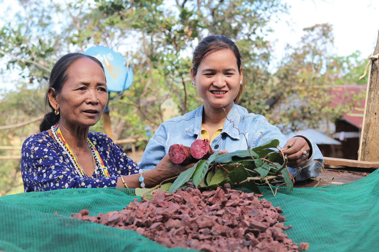 Lâm Đồng: Vô rừng đào củ Chi Kut, hái 27 thứ lá, rễ cây nhìn như cỏ dại, không ngờ là bài thuốc quý - Ảnh 1.