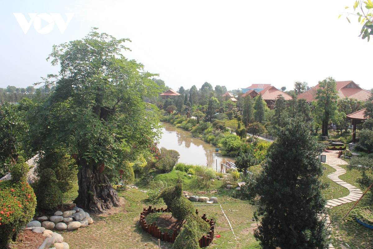 Tiền Giang: Vườn kiểng cổ thụ lớn nhất miền Tây, cây Vạn niên tùng 100 tuổi trông thế này mà giá tới 5 tỷ đồng - Ảnh 1.
