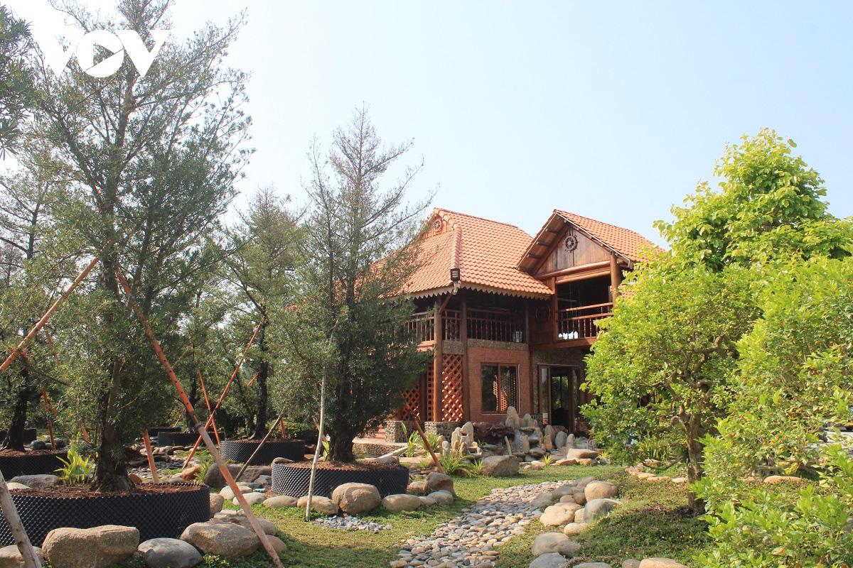 Tiền Giang: Vườn kiểng cổ thụ lớn nhất miền Tây, cây Vạn niên tùng 100 tuổi trông thế này mà giá tới 5 tỷ đồng - Ảnh 7.