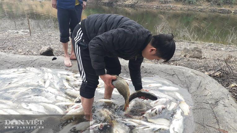 Thái Nguyên: Hàng tấn cá bỗng dưng chết không rõ nguyên nhân - Ảnh 3.