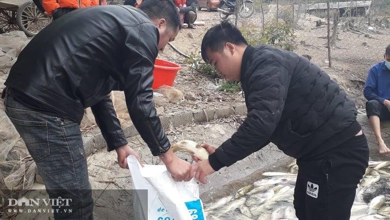 Thái Nguyên: Hàng tấn cá bỗng dưng chết không rõ nguyên nhân - Ảnh 2.