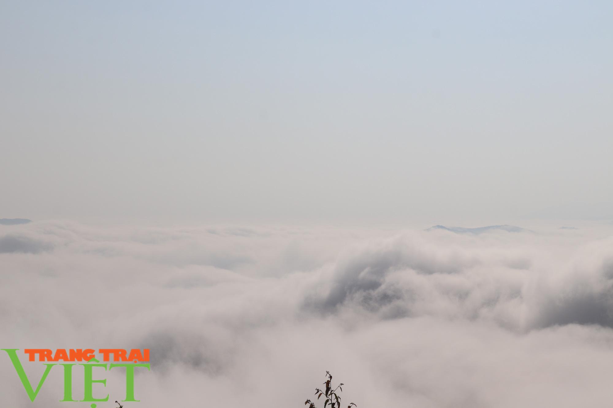 Săn mây trên đỉnh Tênh Phông những ngày đầu xuân - Ảnh 7.