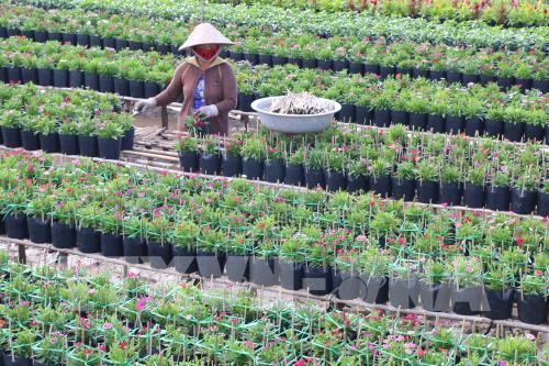 Trồng hoa, cây kiểng, kinh doanh dịch vụ hoa, cây kiểng mang lại mỗi năm mấy ngàn tỷ đồng cho tỉnh Đồng Tháp? - Ảnh 1.