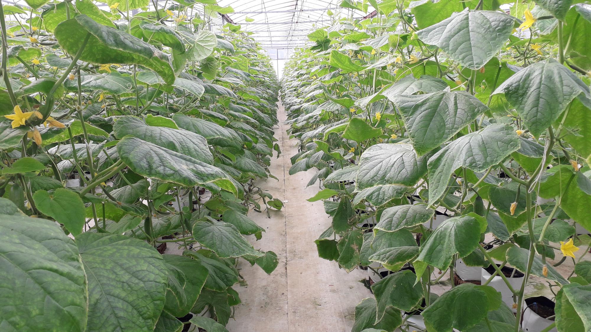 Thái Nguyên hỗ trợ gần 71 tỷ đồng cho sản xuất nông nghiệp - Ảnh 1.