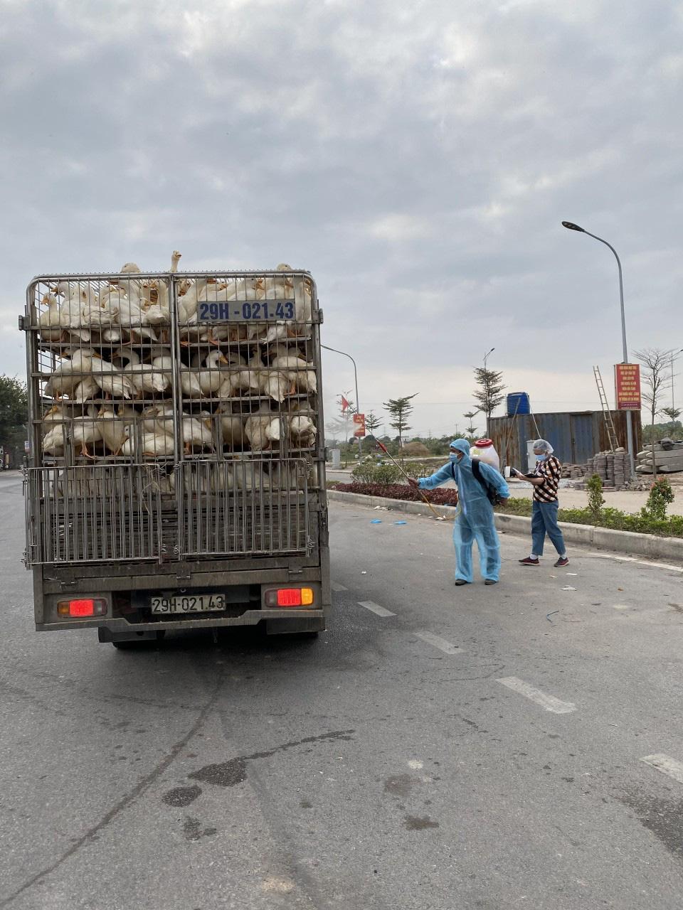 700.000 con gà cần tiêu thụ gấp, Hải Dương mong các tỉnh tạo điều kiện vận chuyển - Ảnh 3.