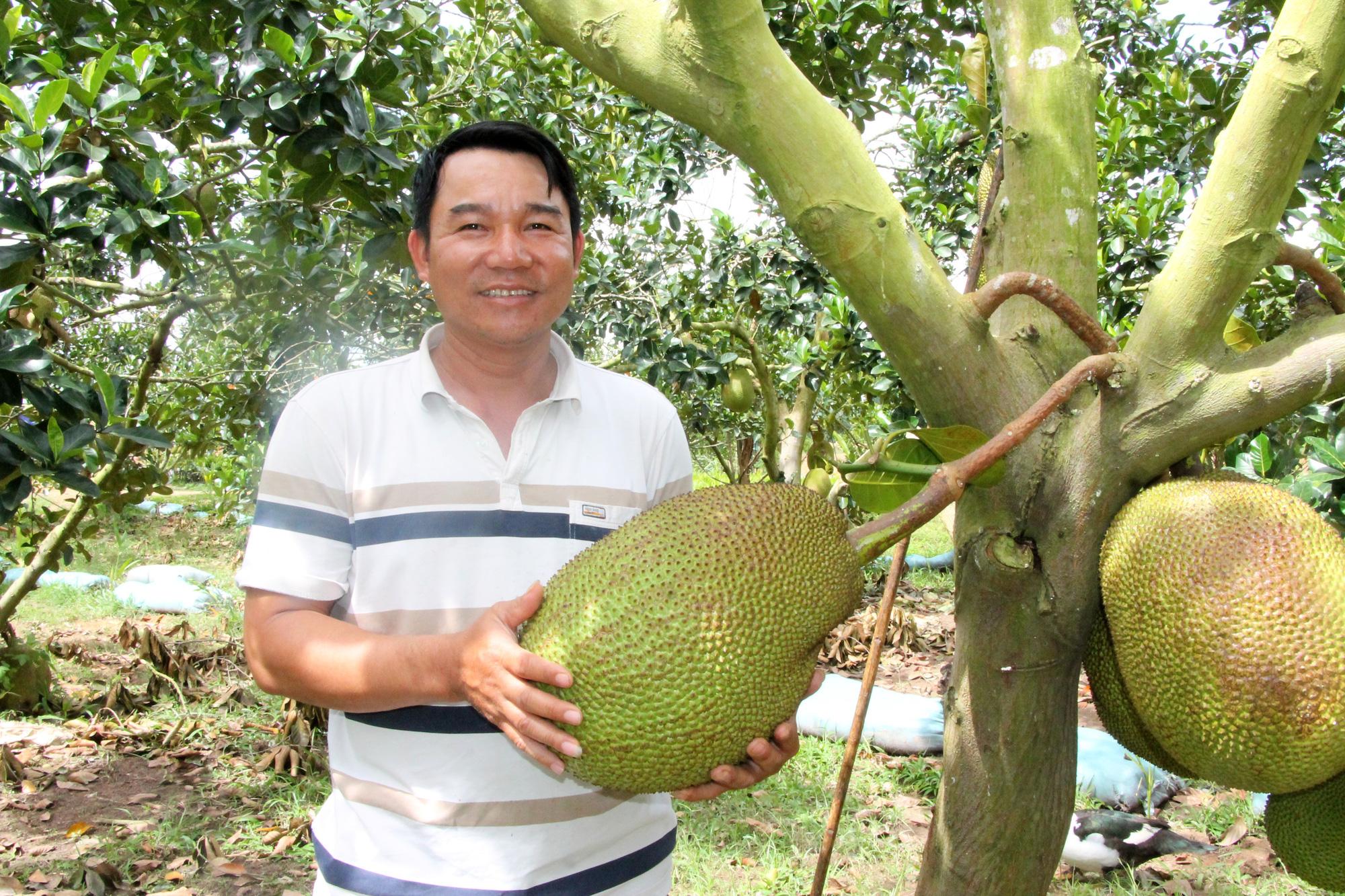 Vườn trồng mít Thái rộng 20ha của 1 ông nông dân tỉnh Đắk Lắk, bất ngờ những cây mít ra trái từ gốc lên ngọn - Ảnh 1.