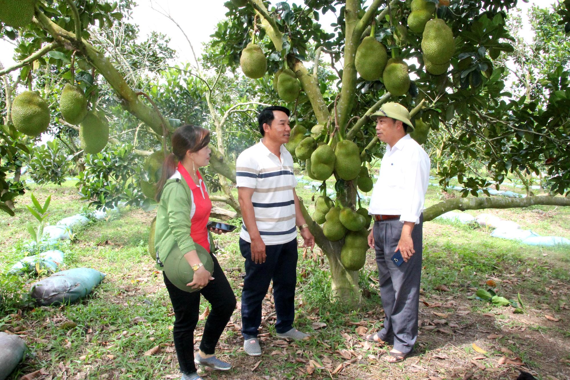 Vườn trồng mít Thái rộng 20ha của 1 ông nông dân tỉnh Đắk Lắk, bất ngờ những cây mít ra trái từ gốc lên ngọn - Ảnh 3.