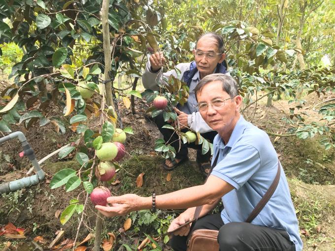 """Ông nông dân Bến Tre có nhiều giống sầu riêng quý, bòn bon ăn siêu ngon, trồng là """"đẻ"""" ra tiền - Ảnh 1."""