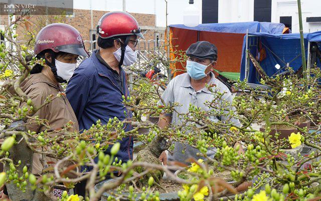 """Bình Định: Trồng cây ra hoa màu vàng, chỉ bán """"chạy"""" dịp Tết, thu về gần 80 tỷ đồng - Ảnh 3."""