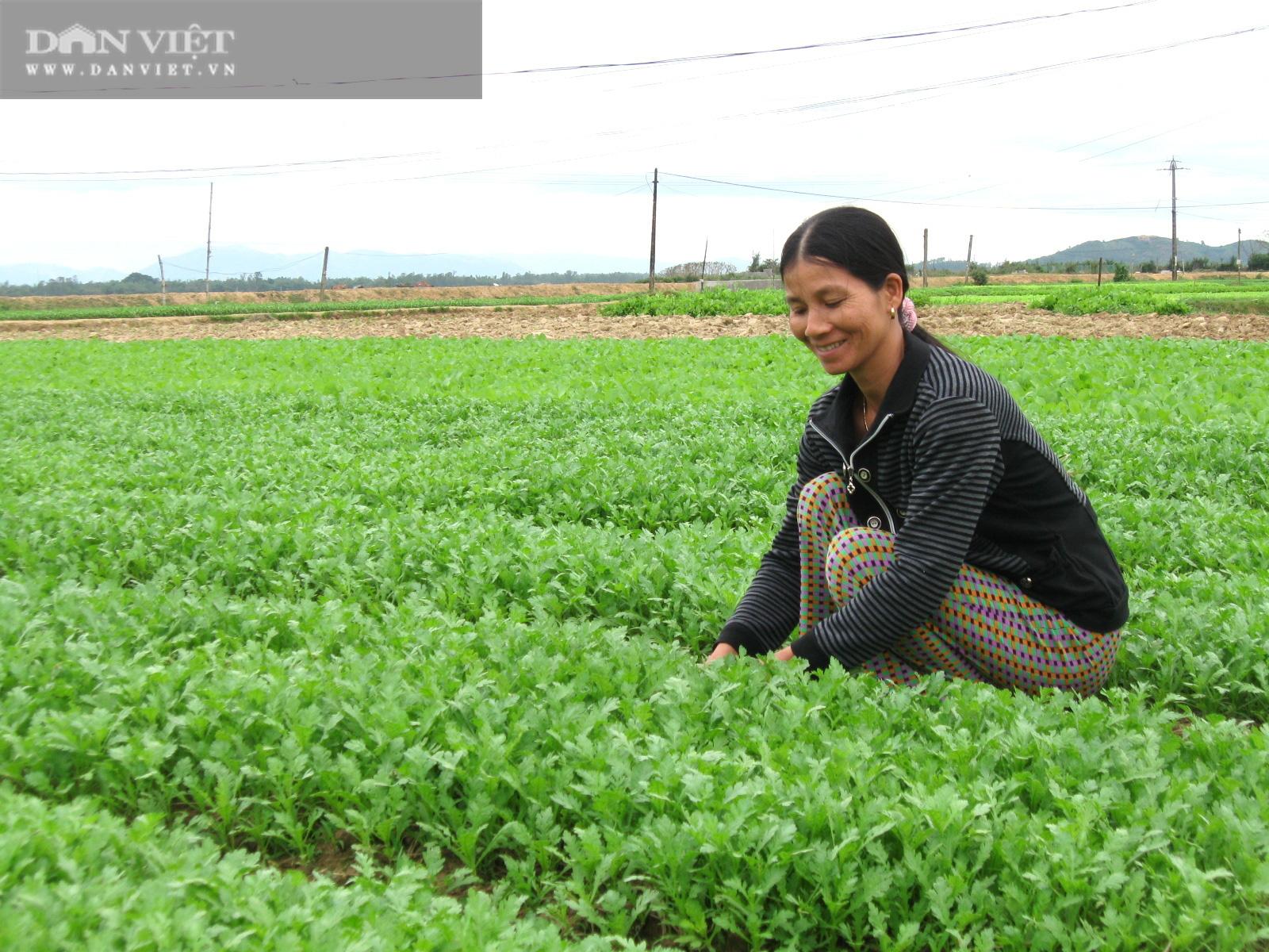 """Rau """"bán chạy như tôm tươi"""", nông dân Bình Định trúng đậm vụ Tết - Ảnh 3."""