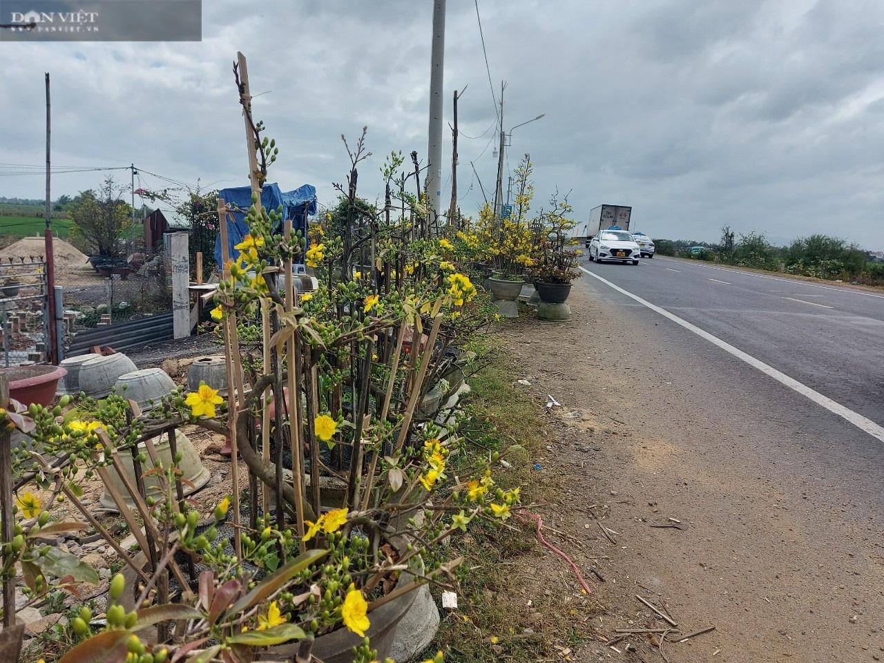 """Bình Định: Trồng cây ra hoa màu vàng, chỉ bán """"chạy"""" dịp Tết, thu về gần 80 tỷ đồng - Ảnh 2."""
