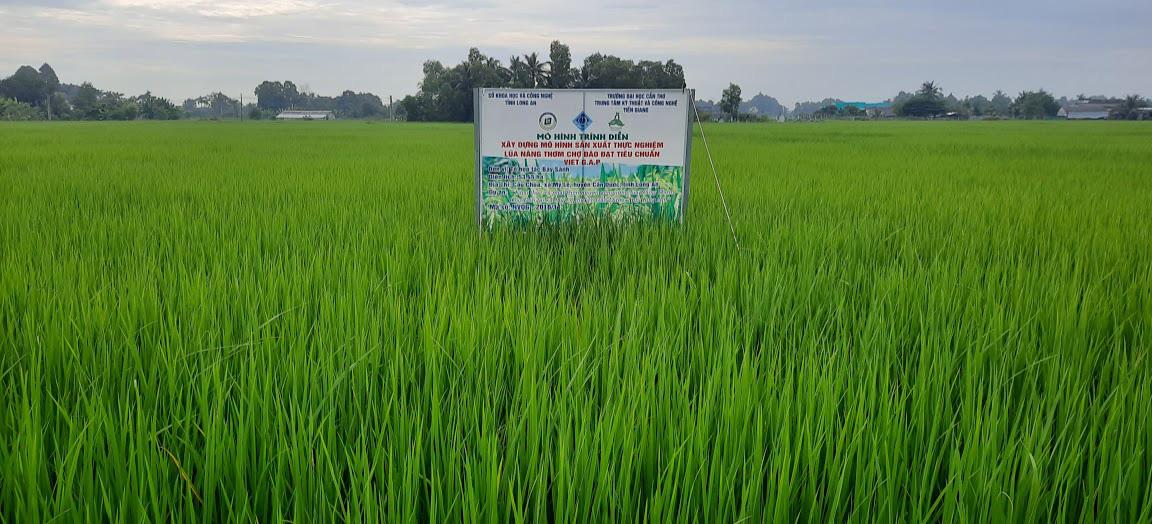 Kể chuyện làng: Nhớ mùi cơm gạo Nàng Thơm với thịt kho tàu chiều 30 Tết - Ảnh 1.