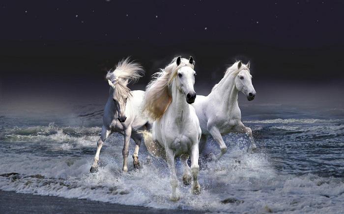Từ giờ đến cuối tháng Giêng, 3 con giáp dễ phát tài và thành công - Ảnh 4.