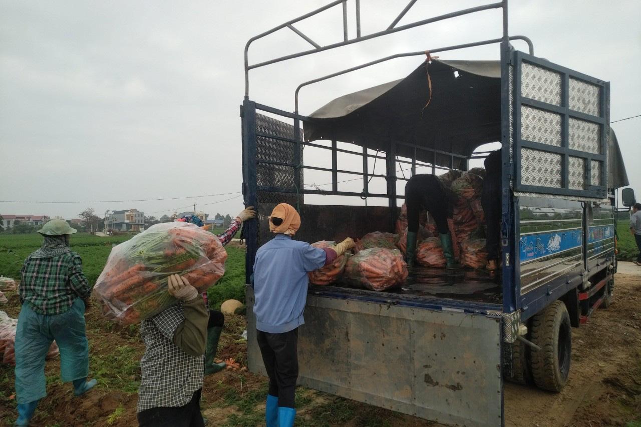 Hải Dương: Nông dân thấp thỏm vì hàng chục nghìn tấn nông sản chờ được giải cứu - Ảnh 4.