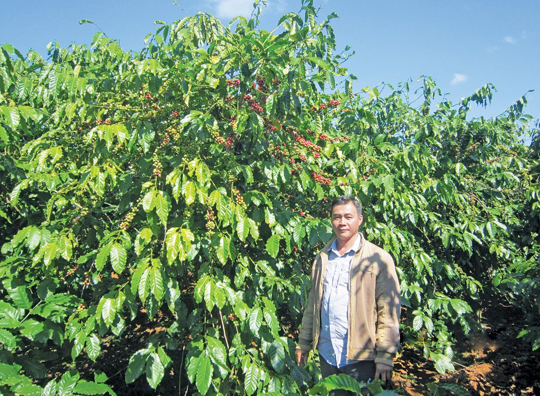 """Gia Lai: Trồng cà phê giỏi """"độc nhất vô nhị"""" như anh nông dân này, không giàu... mới lạ! - Ảnh 1."""